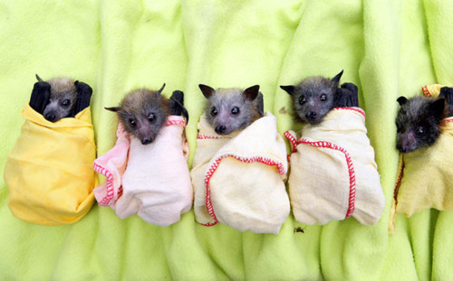 organized baby bats