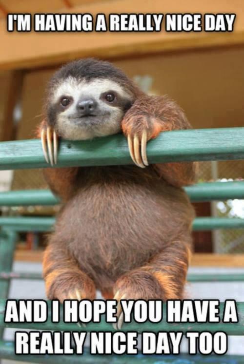 nice sloth