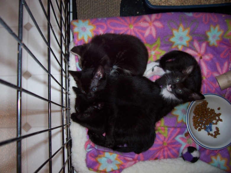 a pile of kittens
