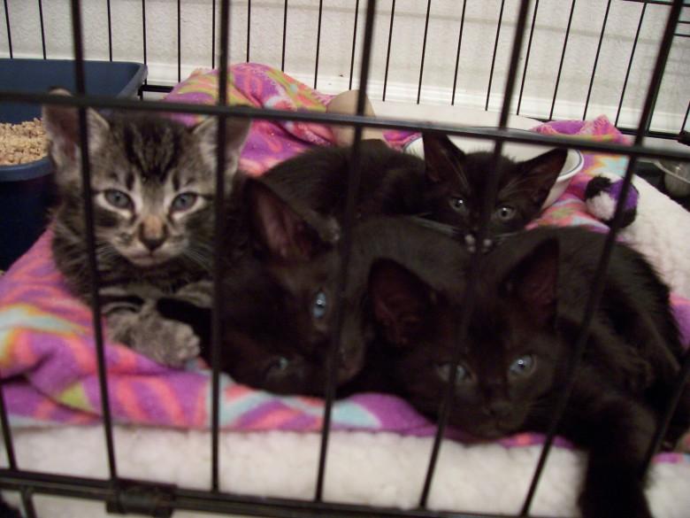 4 little kitten faces