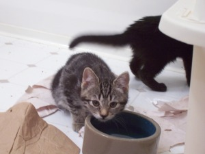 shy kittens 022