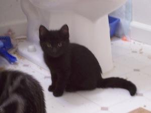 shy kittens 023