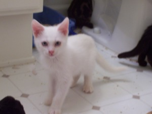 shy kittens 024