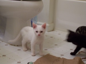 shy kittens 025