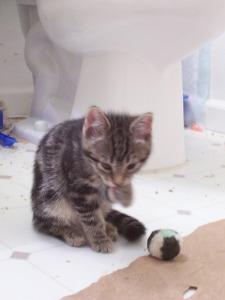 shy kittens 027