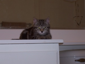 shy kittens 032