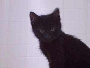 shy kittens 035