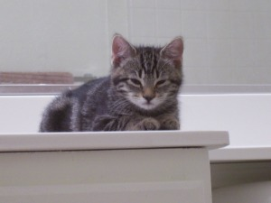 shy kittens 036
