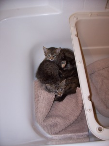 babies in the bathtub 001