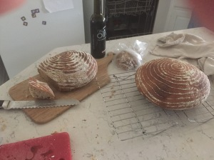 Sourdough boules